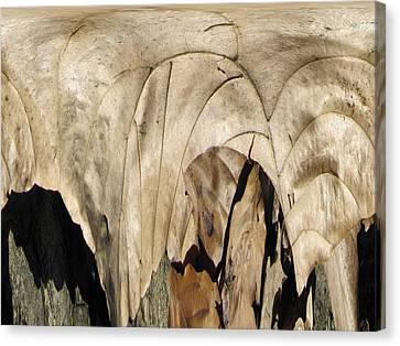 Forest Floor Canvas Print by Tim Allen