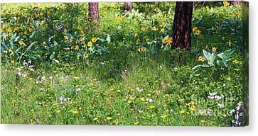 Forest Flowers Landscape Canvas Print by Carol Groenen