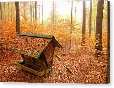 Forest In Autumn With Feed Rack Canvas Print by Matthias Hauser