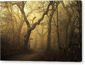 Forest Canvas Print by Leif L?ndal