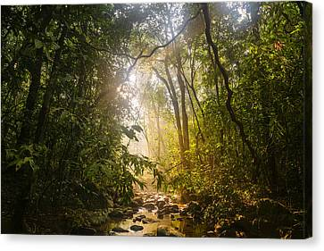 Forest Light At Western Ghats In Karnataka In India Canvas Print by Vishwanath Bhat