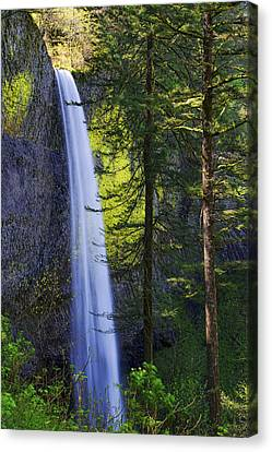 Forest Mist Canvas Print by Chad Dutson