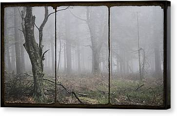 Forest Of Fog Canvas Print by Daniel Hagerman