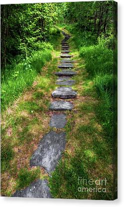 Forest Path Canvas Print by Adrian Evans