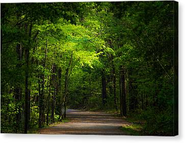 Forest Path Canvas Print by Parker Cunningham
