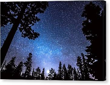 Forest Star Gazing An Astronomy Delight Canvas Print by James BO  Insogna