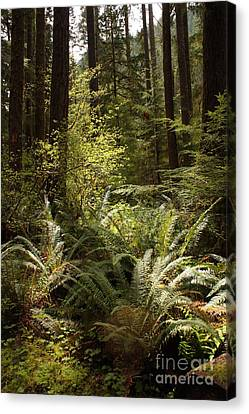 Forest Sunlight And Shadows  Canvas Print by Carol Groenen