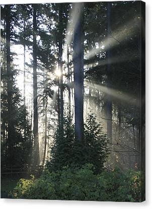 Forest Sunrise Canvas Print by Crista Forest