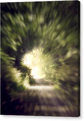 Forest Tunnel Canvas Print by Wim Lanclus