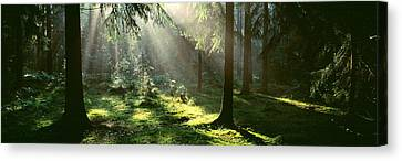 Forest Uppland Sweden Canvas Print by Panoramic Images