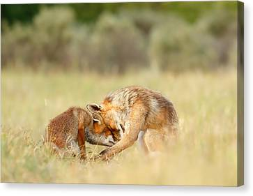 Foreverandeverandever - Red Fox Love Canvas Print by Roeselien Raimond