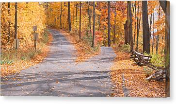 Forked Road In A Forest, Vermont, Usa Canvas Print by Panoramic Images