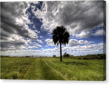 Fort Moultrie Palm  Canvas Print by Dustin K Ryan