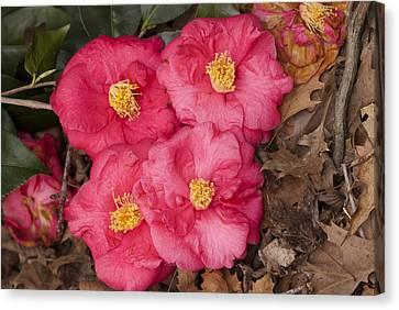 Four Flowers Canvas Print by Don  Wright