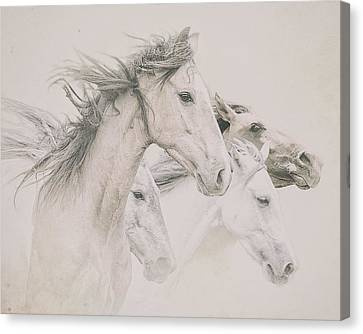 Four Horses Canvas Print by Ron  McGinnis