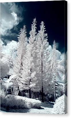 Four Tropical Pines Infrared Canvas Print by Adam Romanowicz