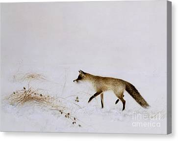 Fox In Snow Canvas Print by Jane Neville