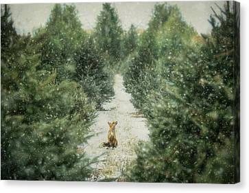 Fox In The Flurries Canvas Print by Carrie Ann Grippo-Pike