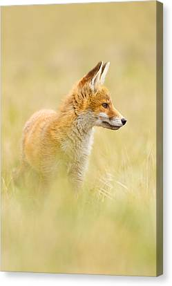 Fox In Thoughts Canvas Print by Roeselien Raimond
