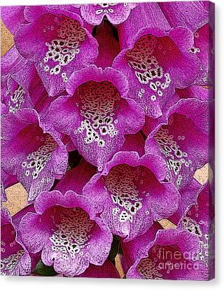 Foxglove Canvas Print by Diane E Berry