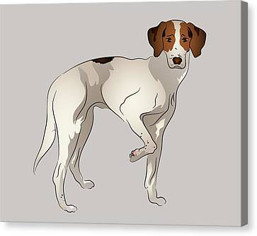 Foxhound Canvas Print by MM Anderson