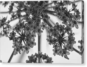 Fractal Flower Photoset 02 Canvas Print by Ryan Kelly