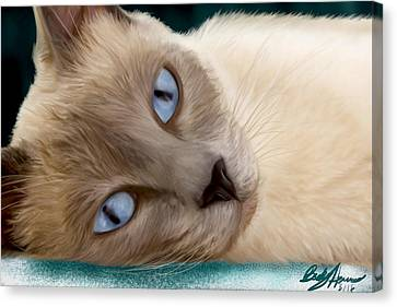 Frankie Blue Eyes Canvas Print by Becky Herrera