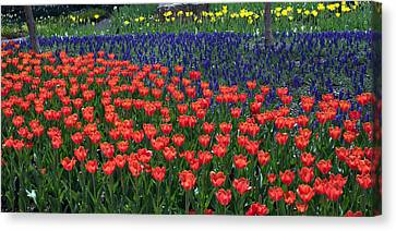 Franklin Park Conservatory Tulips 2015 Canvas Print by Mindy Newman