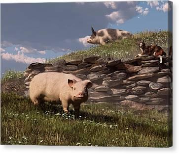Free Range Pigs Canvas Print by Daniel Eskridge