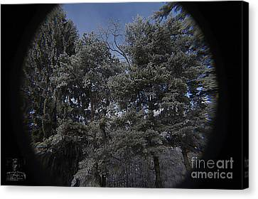 Freezing-fog On Evergreens Canvas Print by Timothy Connard