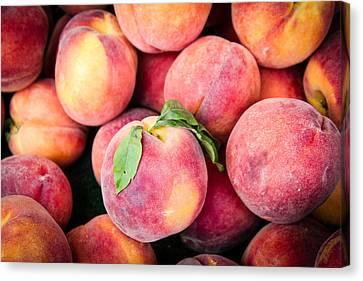 Fresh Peaches Canvas Print by Dina Calvarese