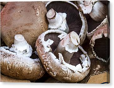 Fresh Portabella Mushrooms Canvas Print by Teri Virbickis