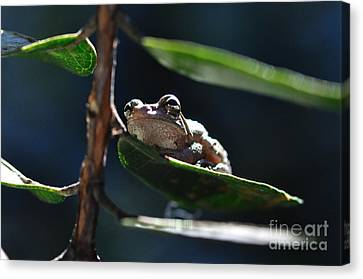 Frog With Twinkle In Eye Canvas Print by Wayne Nielsen