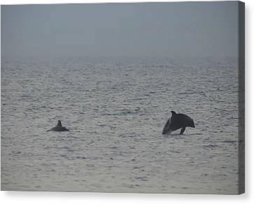 Frolicking Dolphins Canvas Print by Bill Cannon