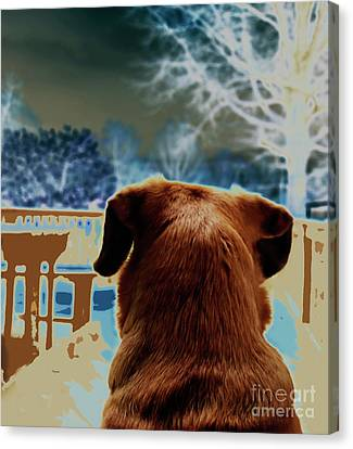 From Her Perspective   Canvas Print by Steven  Digman