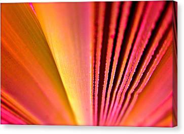 Fron Fan Unfolding Canvas Print by Gwyn Newcombe