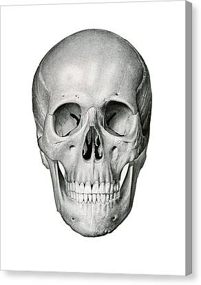 Frontal View Of Human Skull Canvas Print by German School