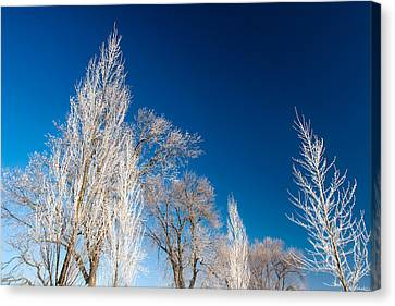 Frost Covered Trees Canvas Print by Todd Klassy