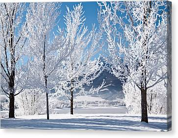 Frosted Trees In Ogden Valley Utah Canvas Print by Utah Images