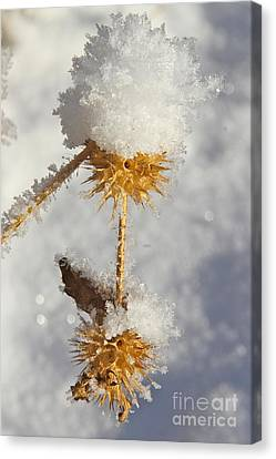 Frosty Spikes Canvas Print by Rick  Monyahan