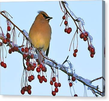 Frozen Dinner  Canvas Print by Tony Beck