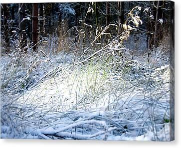 Frozen Grass Canvas Print by Svetlana Sewell