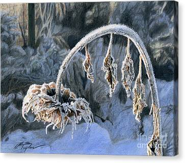 Frozen Light Canvas Print by Nichole Taylor