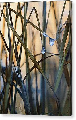 Frozen Raindrops Canvas Print by Sharon Foster