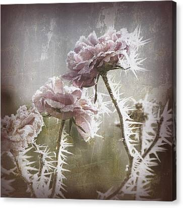 Frozen Roses Canvas Print by Bonnie Bruno