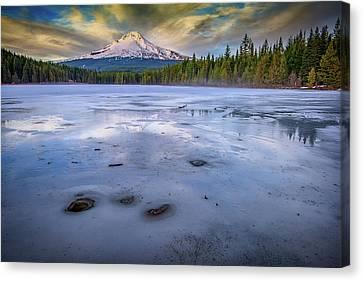 Frozen Trillium Canvas Print by Rick Berk