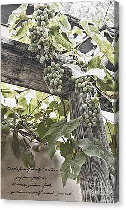 Fruit Of The Spirit Canvas Print by Diane Macdonald