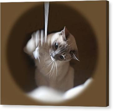 Fun Time For Kitty Canvas Print by Linda Phelps