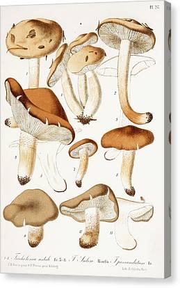 Fungi Canvas Print by Jean-Baptiste Barla
