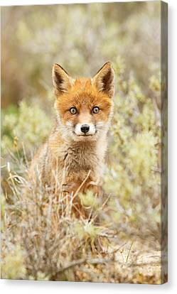 Funny Face Fox Canvas Print by Roeselien Raimond